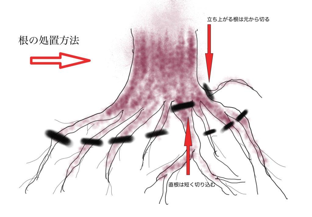 植え替え時の根の剪定処理